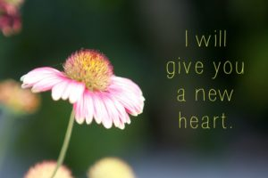 Way #44 – A new heart for a new life